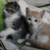 BitDegree is the new world for all people.