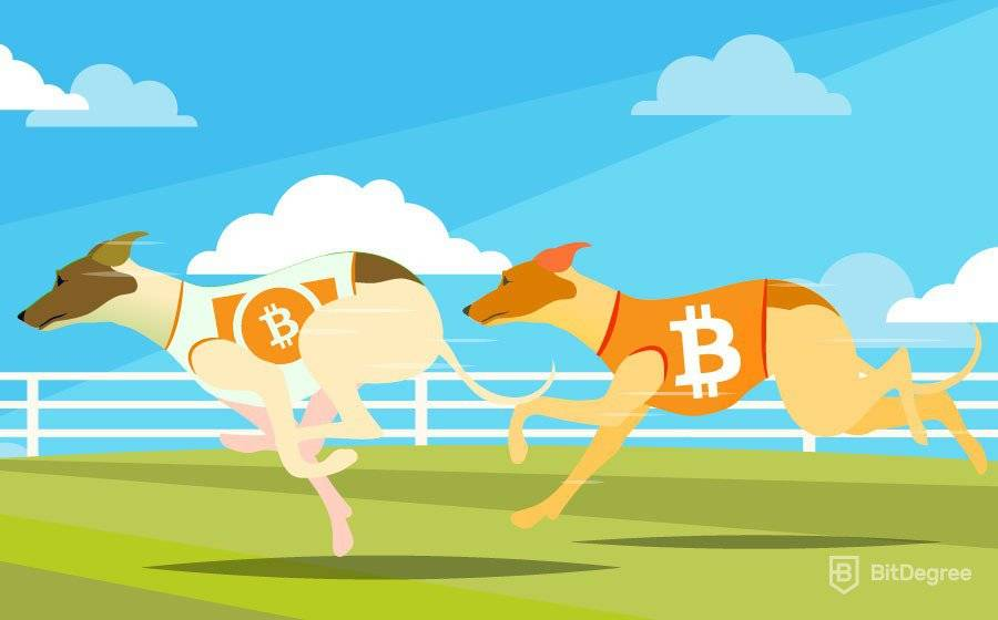 Bitcoin Cash VS Bitcoin: Which One Should You Choose